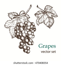 Hand drawn illustrations of  grapes.