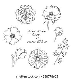 Hand drawn ink flower sketch set. Gerbera, succulent, dog-rose, magnolia,  bluebell. Vector EPS 10