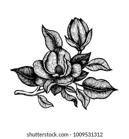 Hand drawn ink peony flowers. Beatuful botanical elements for postcard designs.