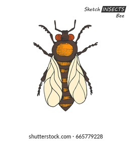 Hand drawn ink sketch of bee isolated on white background. Vector illustration. Drawing in vintage style.