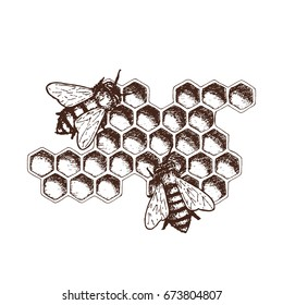 Hand drawn ink sketch illustration of honey combs, organic nature product. Vector