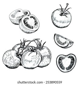Hand drawn ink tomatoes sketches set