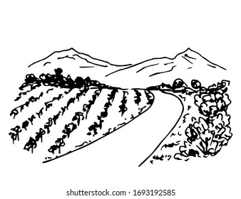 Hand drawn ink vector simple doodle. Vineyard landscape, rows of grape bushes, perspective, rural road, outlines of mountains on the horizon. Engraving style, label printing, wine list, countryside.
