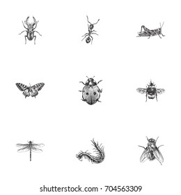Hand Drawn Insects Sketches Set. Collection Of Bee, Damselfly, Insect And Other Sketch Elements.
