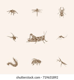 Hand Drawn Insects Sketches Set. Collection Of Black Widow, Spider, Mantis And Other Sketch Elements.