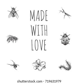Hand Drawn Insects Sketches Set. Collection Of Worm, Housefly, Grasshopper And Other Sketch Elements.