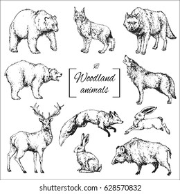 hand drawn isolated contour of woodland animals: wolf, bear, deer, fox, boar, hare, lynx