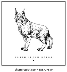 hand drawn isolated illustration with lynx and place for your text. minimalism vintage  invitation, label or card