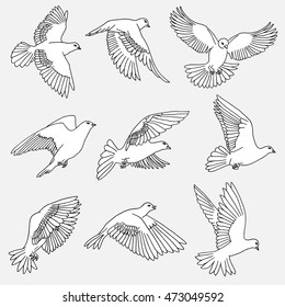 Hand drawn isolated illustration of pigeons / doves