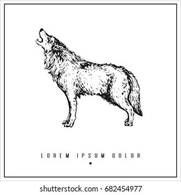 hand drawn isolated illustration with wolf and place for your text. minimalism vintage  invitation, label or card