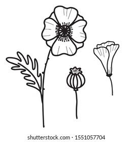 Hand drawn isolated poppy flowers, poppy bud, poppy seed. Outline poppy icons. Flower line icons. Botanical illustration.