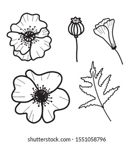 Hand drawn isolated poppy flowers, poppy bud, poppy seed and leaf. Outline poppy icons. Flower line icons. Botanical illustration.