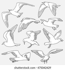 Hand drawn isolated seagulls