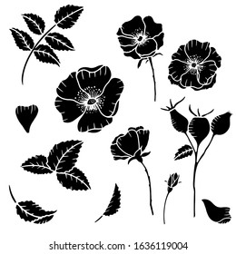 Hand drawn isolated wild rose flowers, wild rose bud, rose hip berries  and leaves.  Rose hip silhouette. Wild roses flowers line icons. Botanical illustration set.