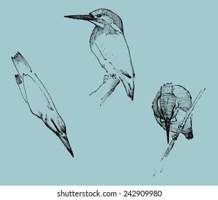Hand drawn kingfishers