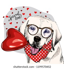 Hand drawn labrador retriever with heart shape baloon. Vector Valentine day greeting card. Cute colorful dog wears glasses, bandana. Romantic design. Lovely pet portrait. Poster, banner. Spread love.