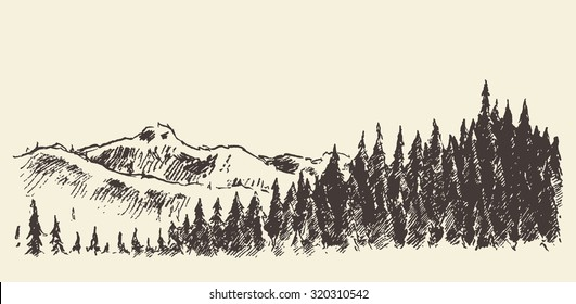 Hand drawn landscape with fir forest and meadow, vintage vector illustration