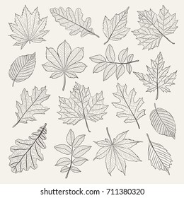 Hand drawn leafs set. Vector illustration