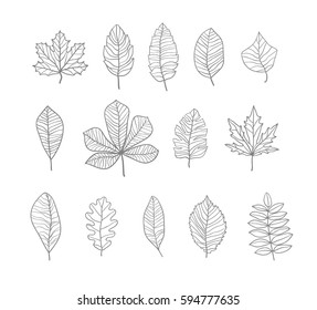 Hand drawn leaves contours set. Vector illustration.