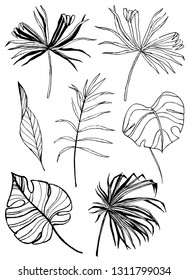 Hand drawn leaves of tropical plants. Black outline set isolated on white background. Philodendron, banana, monstera, palm leaf. Vector set of leaves.