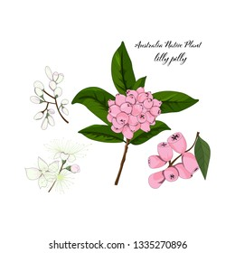 hand drawn lilly pilly flower and riberry,australia native plant element in vector