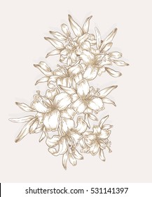 Hand drawn lily flowers. Decorative royal lilies composition