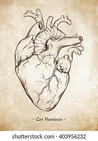 "Hand drawn line art  anatomically correct human heart. Da Vinci sketches style over grunge aged paper background. Vintage tattoo design vector illustration. Enscription is latin term ""human heart"""