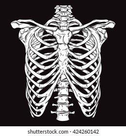 Rib Cage Images Stock Photos Vectors Shutterstock
