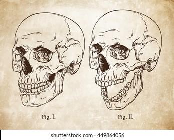 Hand drawn line art anatomically correct human skulls set. Da Vinci sketches style over grunge aged paper background vector illustration
