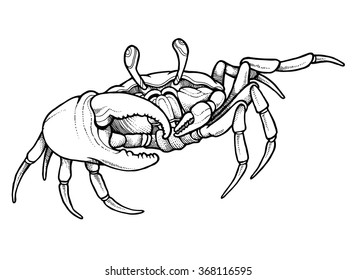 Hand drawn line art crab