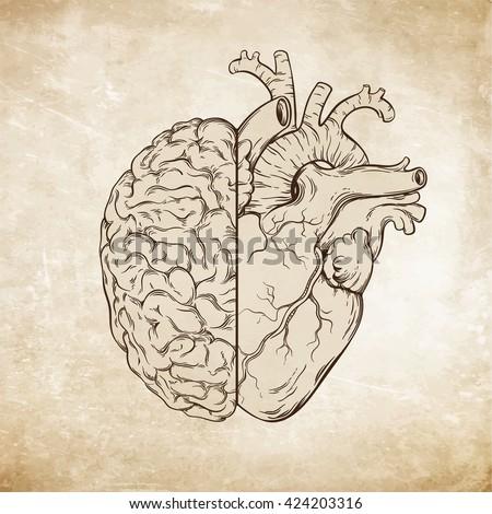 Hand Drawn Line Art Human Brain Stock Vector Royalty Free