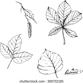 Hand drawn line art. Ink vector sketch of different autumn leaves isolated on the white background