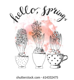 Hand drawn line art pot hyacinth flower and hello spring lettering on pink watercolor splash. Ink drawing for easter decor, garden backgrounds, floral design.