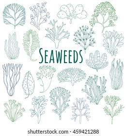 Hand drawn line underwater seaweed plants icons isolated on white background. Vector illustration