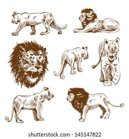 Hand drawn lion set vector illustration