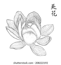 Hand drawn lotus flower with Chinese hieroglyphs meaning 'Beautiful flower'. Black and white vector illustration