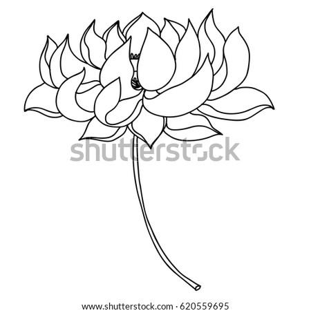 Hand drawn lotus flower tattoo design stock vector royalty free hand drawn lotus flower for tattoo design mightylinksfo