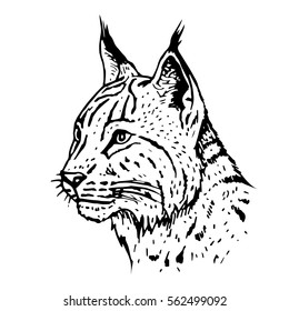 Hand drawn lynx head. Retro realistic animal isolated. Vintage style. Doodle line graphic design. Black and white drawing mammal. Vector illustration.
