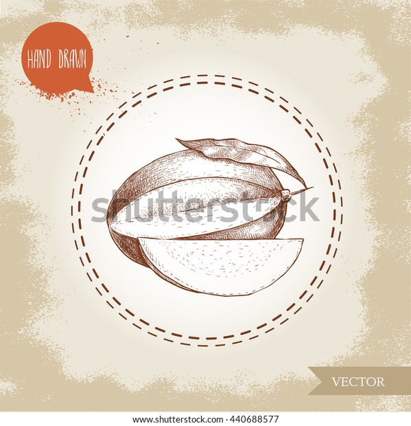 Hand drawn mango fruit with leaf and part of mango. Sketch style vector illustration on rough old background. Eco food.