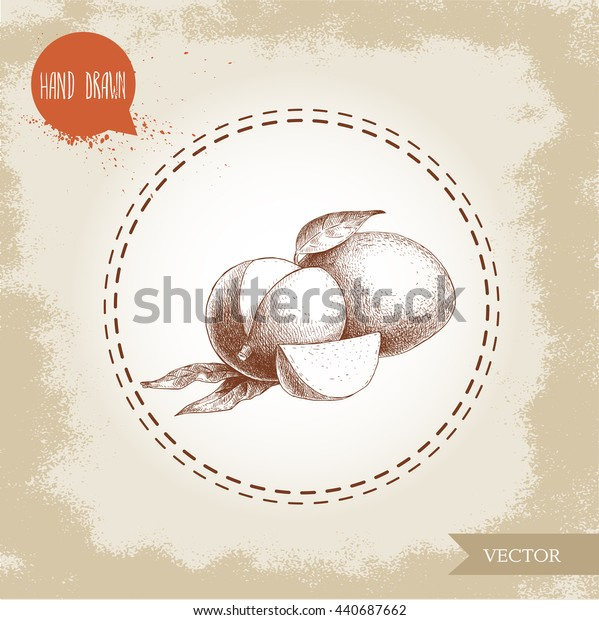 Hand drawn mango fruits with leafs and slices. Sketch style vector fruit illustration on rough old background. Eco food.