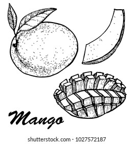 Hand drawn mango fruits set with leafs and mango slices and cubes. Botanical mango fruit illustration. Vector illustration with sketch fruit.