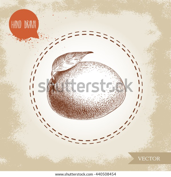 Hand drawn mango. Sketch style vector fruit illustration on rough old background. Eco food.