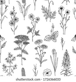 Hand drawn meadow flowers seamless pattern. Vector illustration in sketch style