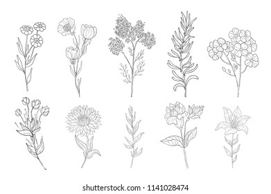 Hand drawn medical herbs, line drawing plants, floral background