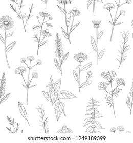 Hand drawn medicinal herbs. Vector seamless pattern