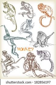 hand drawn monkey vector set