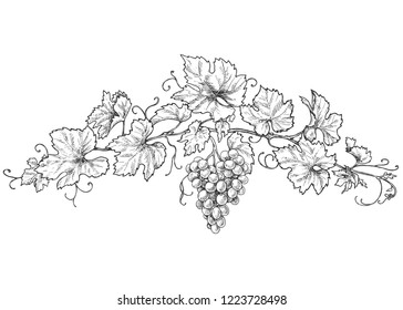 Hand drawn monochrome grape branchs with leaves and berries. Black and white decorations with grapes. Vector sketch.