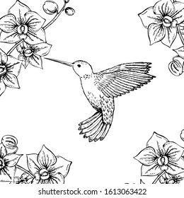 Hand drawn monochrome hummingbird and orchids. Black and white illustration with flying small hummingbird and flower. Vector sketch.