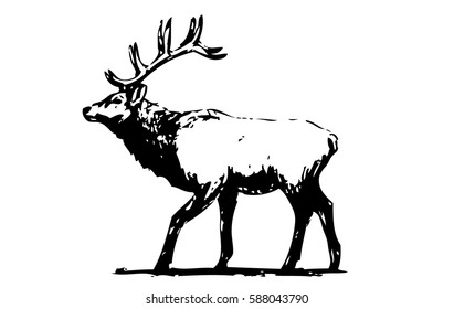 Hand drawn monotonic illustration of an elk. silhouette of elk in the natural environment. illustration of elk on a landscape.