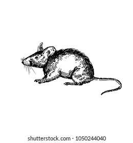 Hand drawn mouse or rat. Sketch, vector illustration.